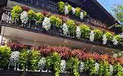 namen-uporabe-okrasno-vrtnarjenje-2-small-bitrate