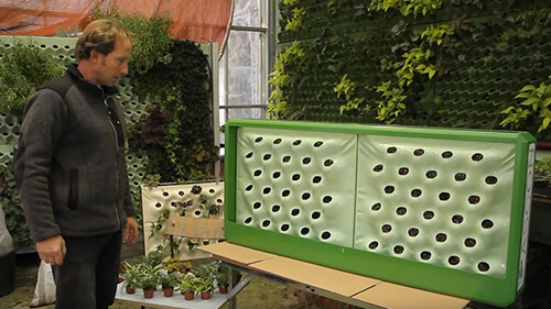 zelena-stena-humko