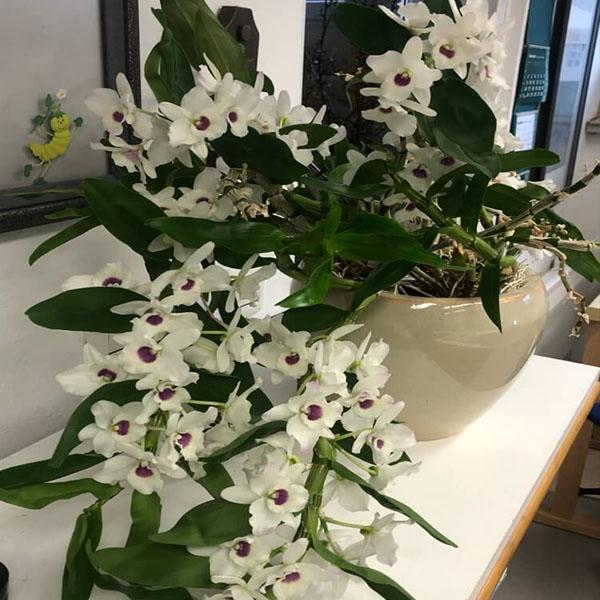 Cvetoča orhideja