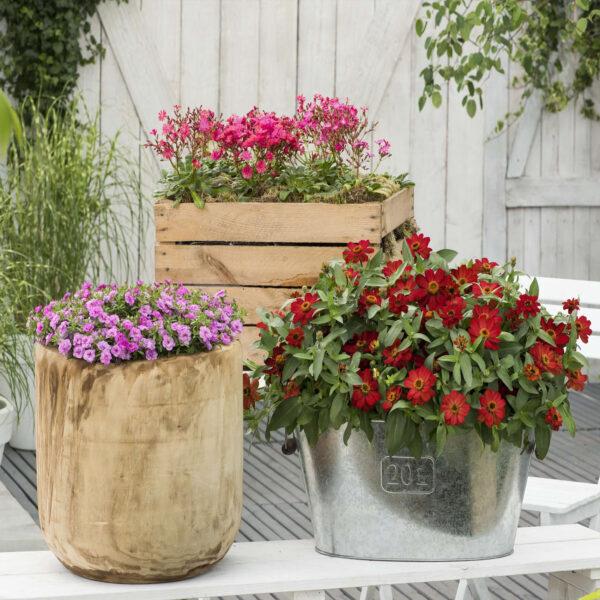 rastline v koritih