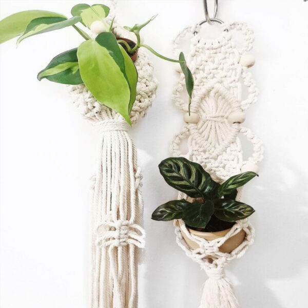 sobne-rastline