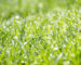 trava-naslovna