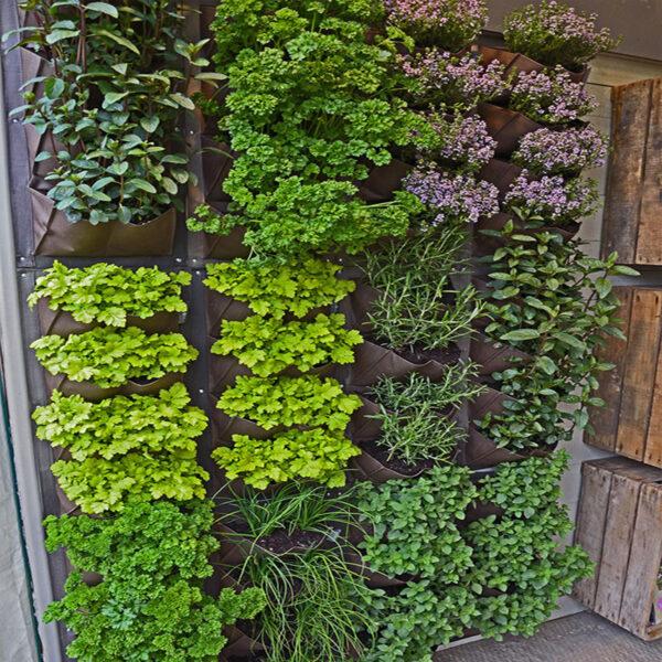 vertikalni-vrt