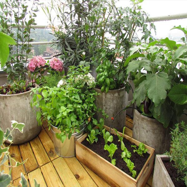 vrt.na-terasi2