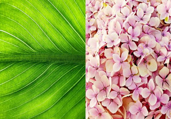Zelenje in cvet