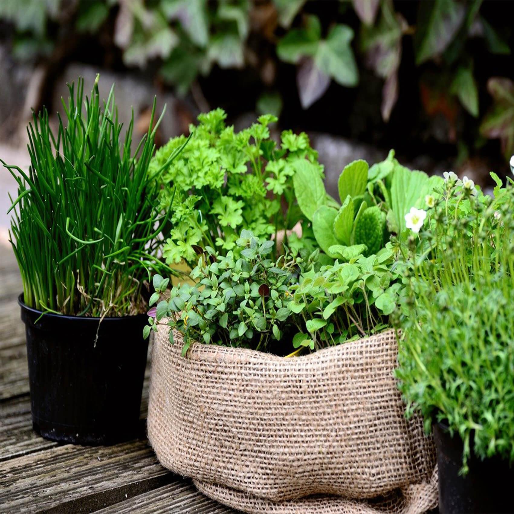Zelišča v vrečah