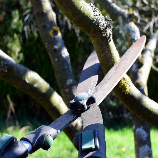 Obrezovanje_dreves